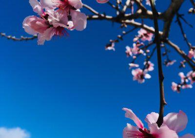 Tenerife Primavera   Frühling